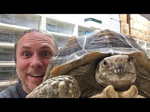 FEEDING MY RHINO IGUANA(Bella) AND TORTIOSE LIVE!!! 🔴
