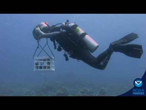 NOAA Assembles And Fills Up New Coral Nursery