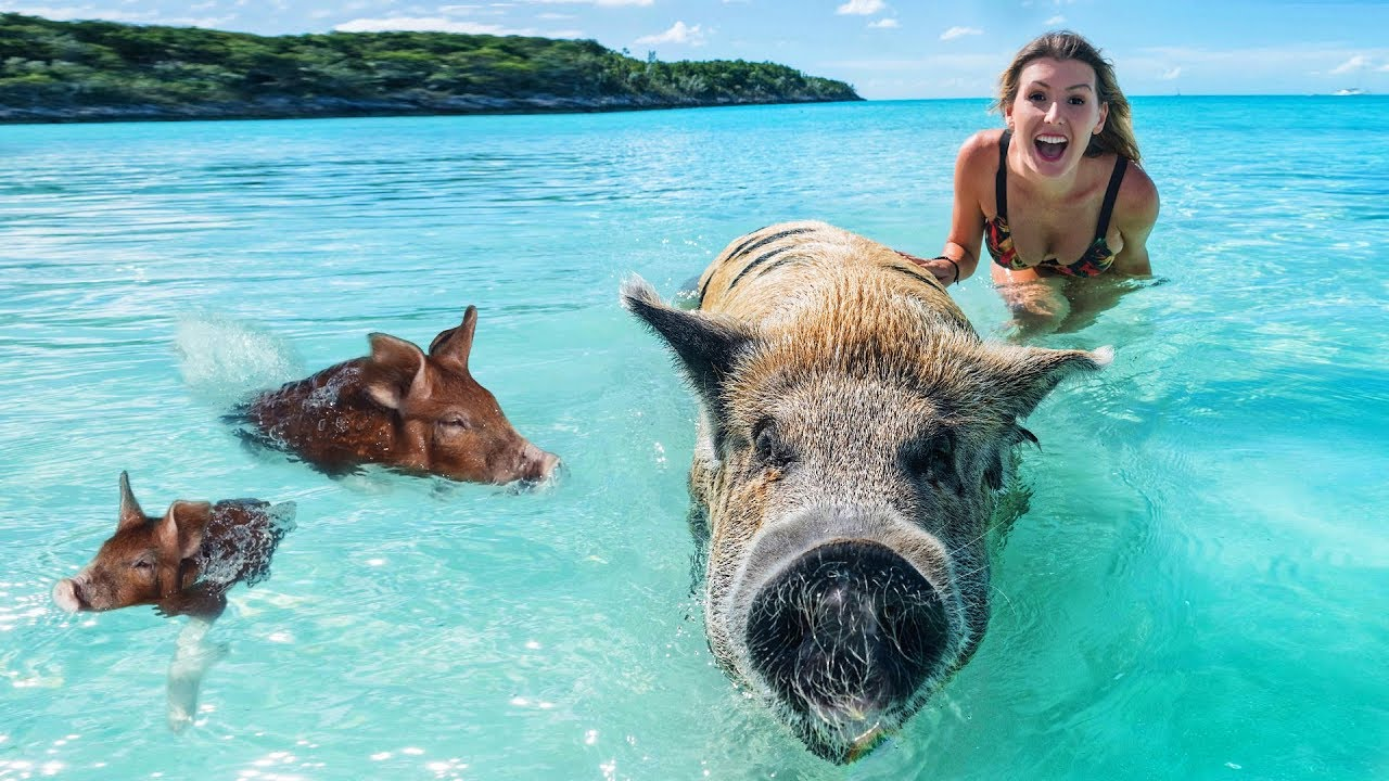 Schwimmende Schweine Bahamas Vlog 15 Youtube