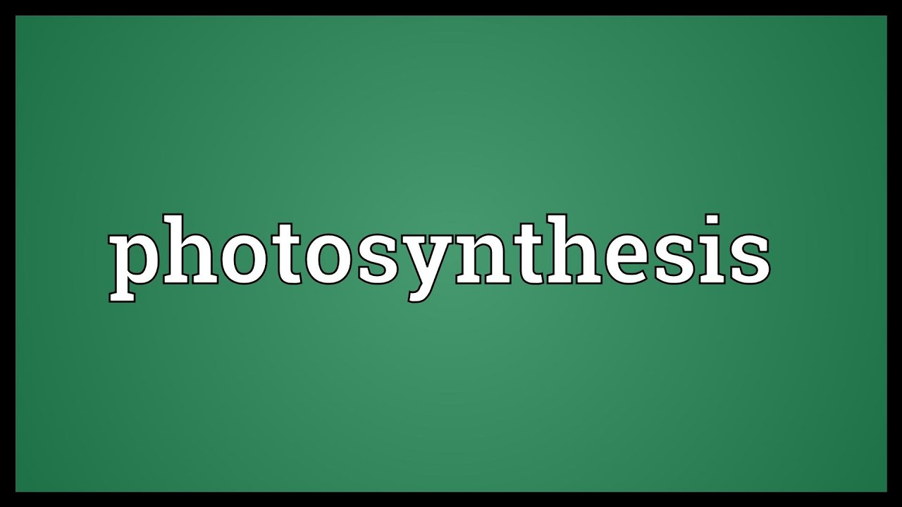 Photosynthesis Meaning  YouTube