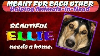 Beautiful ELLIE needs a home  ~  MEANT FOR EACH OTHER (MFEO) slideshow