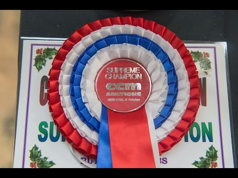 CCM Auctions (Skipton Mart) Christmas show and sale 30th November 2014