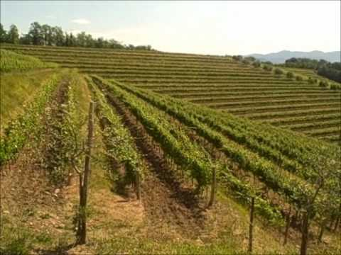 wine article Collio Friuli Italy  Education