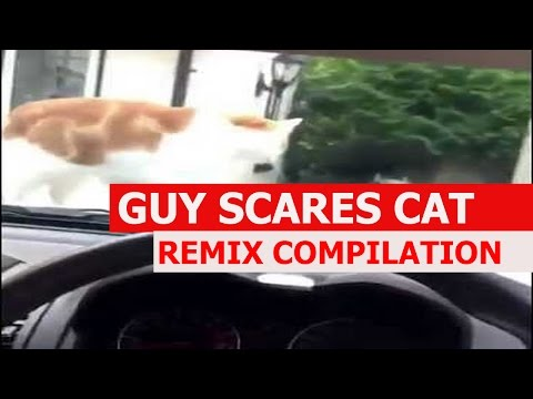 Guy Scares Cat With Car Horn - REMIX COMPILATION