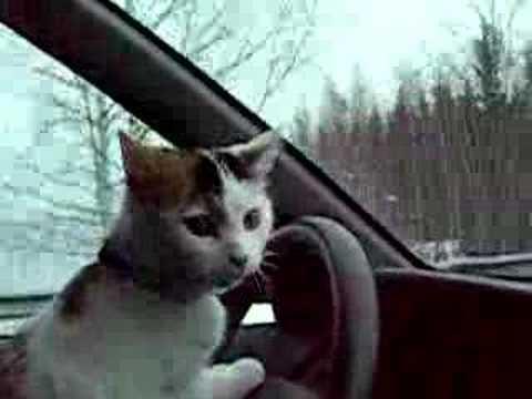 lancome kitten heel eyeshadow