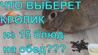 Видео кролика. Смешной домашний кролик развлекает детей и выбирает себе еду.