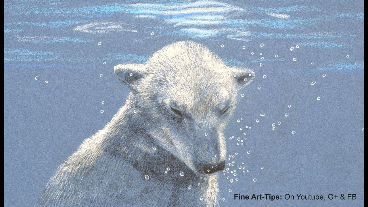 How to Draw a Polar Bear Under Water With Color Pencils  Drawing