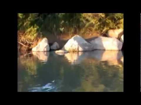 Where To Find Nesting Catfish