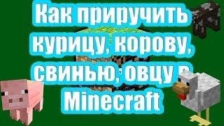 Как приручить курицу, корову, свинью, овцу в Minecraft