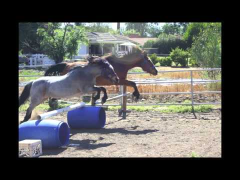 Horse accident. RIP