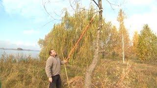 Садові поради: осіння обрізка дерев