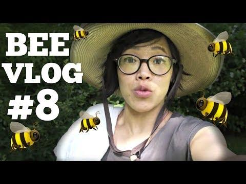 Bee Vlog #8 | First Year of Bee keeping WEEK 8 | 6/5/2017