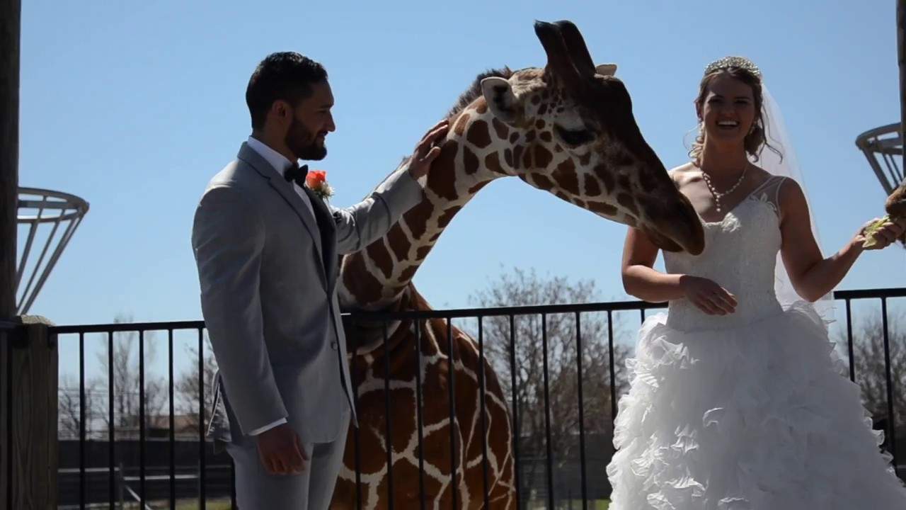 John & Brittney | Wedding Highlight | Wichita, KS | Tanganyika Wildlife Park