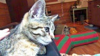 Hildy & Her Kittens  1st Adoption News