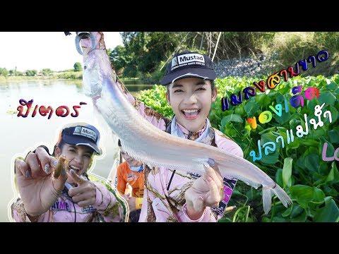 เมย์มี่ ตกปลาแม่น้ำด้วยแมลงสาบขาว #หาปลากับข้าว #MAYME