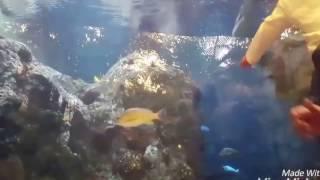 A Visit to the Shark Reef Aquarium at Mandalay Bay Las Vegas