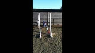 horse free lunging over jump