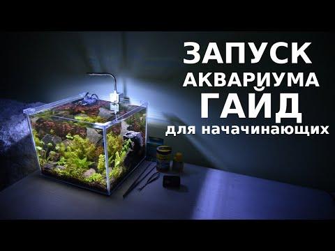 Запуск аквариума гайд для начинающих - пошаговый инструктаж