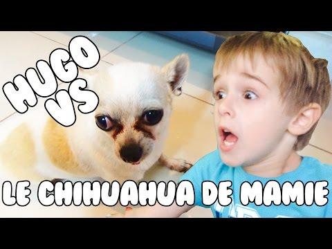 HUGO VS LE CHIHUAHUA DE MAMIE!!!