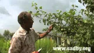 видео обрезка яблонь и груш