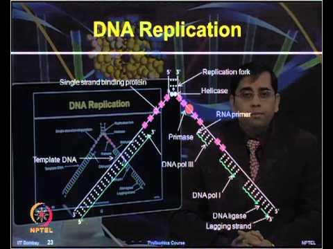 Mod-02 Lec-02 Central Dogma: Basics of DNA, RNA, Proteins