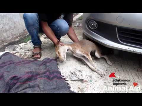 Ricoperto dalle mosche, il cucciolo salvato dalla strada torna a vivere...