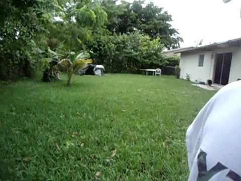 catching lizards in the backyard - YouTube