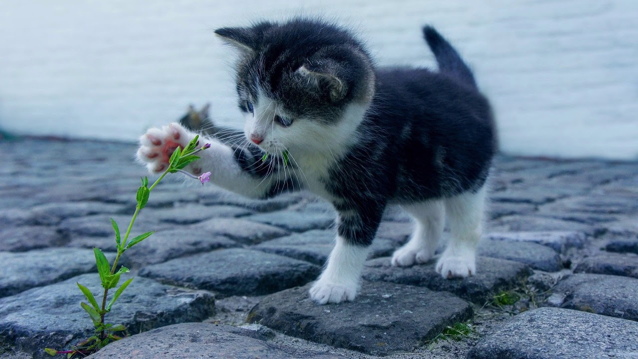 Klingelton Katze Miau Sound Als Handy Ton Kostenlos