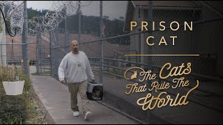 EP 1 | PRISON CAT, GALILEO | THE CATS THAT RULE THE WORLD | SHEBA®