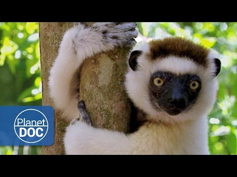 Madagascar. The Children of Lemuria (Full Documentary)