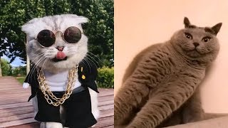 Cute Dogs and Cats | Funny Cats and Dogs Videos Compilation