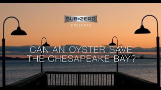 Can an oyster save the Chesapeake Bay? thumbnail