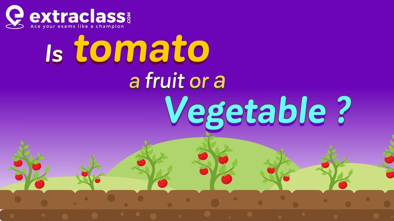 Is tomato  a fruit or a Vegetable | Extraclass.com