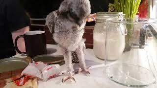 Будни маленькой совы. Очередное стрессирование замученного котика