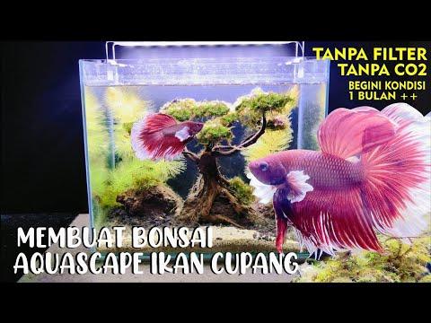 membuat-aquascape-bonsai-simpel-murah-tapi-mewah-pemula