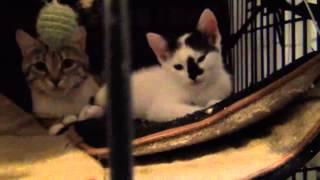 Чёрно-белый котёнок с мамой