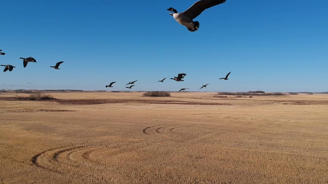 Download Hunting in Saskatchewan Canada