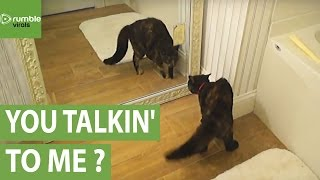 Cat shocked by reflection after discovering mirror