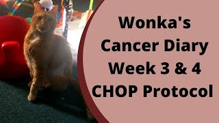 Wonka's Cancer Diary week 3 & 4