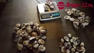Струя кабарги (мускусная железа).(Пушно-меховая компания ARKTUR-22 реализует струю кабарги (мускусная железа) в розницу и оптом по России и 190..., 2016-08-10T08:50:21.000Z)