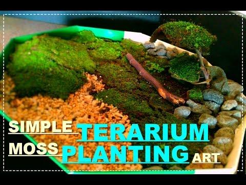 Simple Terarium Moss Planting Art