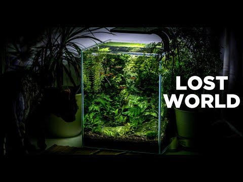 My LostWorld nano tank - The ultimate aquarium for beginners