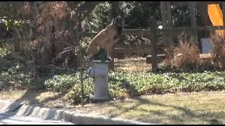 Maryland Dog Training  Andrew And Kayla Placing