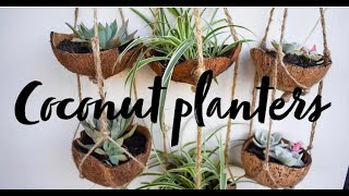How to make a hanging coconut planter + coconut milk