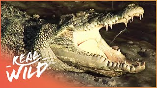Crocodile Island: The Land Of Killer Crocs And More (Wildlife Documentary) | Real Wild