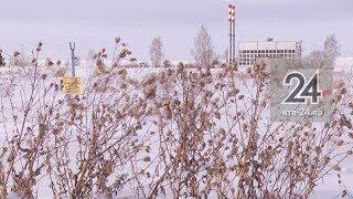 В Камских Полянах построят круглогодичный тепличный комплекс