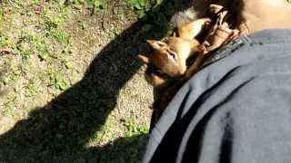 lord humongous the chipmunk peanut thief