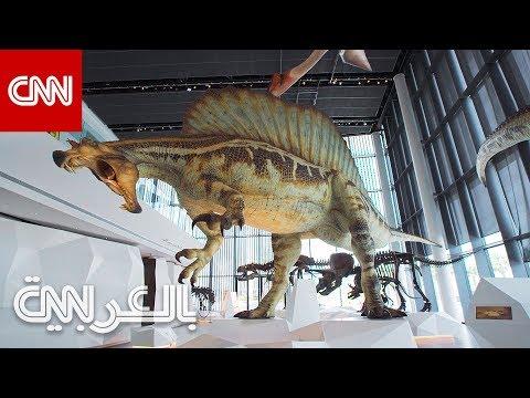 أكبر قاعة عرض ديناصورات في العالم في الكويت  - نشر قبل 7 دقيقة