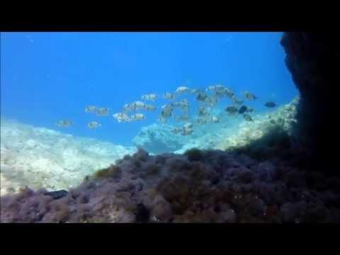 Underwater Life In Adriatic Sea