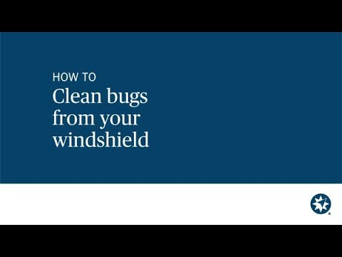 How to get bugs off windshield